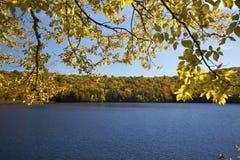 Abedul amarillo y hojas de otoño a lo largo de la orilla de Russell Pond Fotografía de archivo libre de regalías