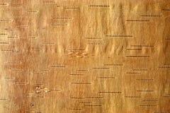 Abedul bark3 Fotografía de archivo libre de regalías
