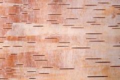 Abedul bark4 Imagen de archivo libre de regalías