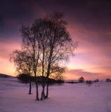 Abedul blanco en el campo de nieve Fotografía de archivo