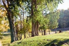 Abedul blanco en el otoño Imagen de archivo