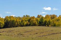 Abedul blanco en la ladera en el otoño Foto de archivo