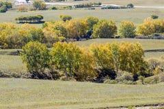 Abedul blanco en la ladera en el otoño Foto de archivo libre de regalías