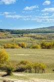Abedul blanco en la ladera en el otoño Imágenes de archivo libres de regalías