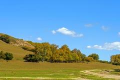 Abedul blanco en la ladera en el otoño Fotos de archivo