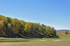 Abedul blanco en la ladera en el otoño Fotografía de archivo