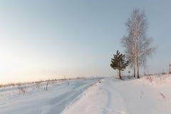 Abedul blanco en la nieve en invierno en el amanecer Fotos de archivo