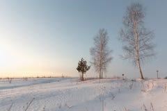 Abedul blanco en la nieve en invierno en el amanecer Imágenes de archivo libres de regalías