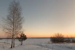 Abedul blanco en la nieve en invierno en el amanecer Fotografía de archivo libre de regalías