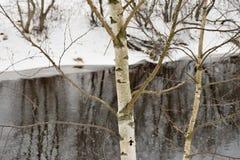 Abedul blanco grande en el alto banco del río Foto de archivo