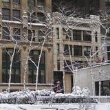 Abedul blanco Manhattan Imagen de archivo libre de regalías