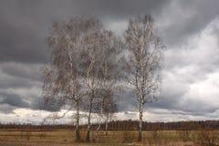 Abedul blanco que crece en un campo contra un cielo azul Foto de archivo