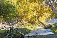 Abedul blanco y corriente en el otoño Fotografía de archivo