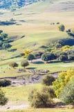 abedul blanco y ovejas de desatención en la ladera Imagenes de archivo