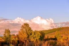 Abedul blanco y prado Fotografía de archivo libre de regalías