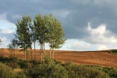 Abedul, campo arado y cielo Foto de archivo libre de regalías