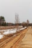 Abedul cerca del camino en la primavera Imagenes de archivo