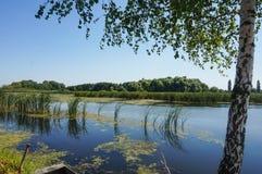 Abedul cerca del lago Fotografía de archivo