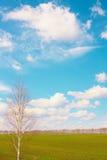 Abedul, cielo, campo Foto de archivo