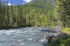 Abedul colgado sobre el río de la montaña Foto de archivo