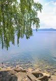 Abedul con el lago y las montañas Fotos de archivo libres de regalías