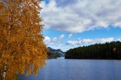 Abedul con las hojas del amarillo en un lago Fotos de archivo
