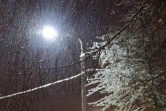 Abedul congelado en la noche fría del invierno Fotografía de archivo