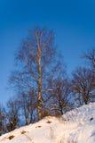 Abedul contra el cielo despejado en invierno Imagenes de archivo