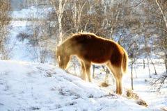 Abedul de la presa del caballo de la nieve Imagen de archivo