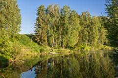 Abedul de la reflexión del lago Imágenes de archivo libres de regalías