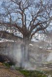 Abedul de piedra viejo, en el valle de géiseres Fotos de archivo
