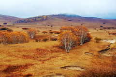 Abedul de plata del otoño en los prados Fotografía de archivo libre de regalías