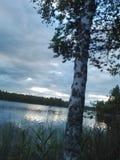 Abedul del árbol de la naturaleza del lago de la opinión del paisaje Imagenes de archivo