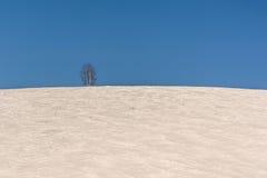Abedul del cielo de la nieve de las colinas Imágenes de archivo libres de regalías