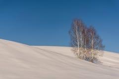 Abedul del cielo de la nieve de las colinas Fotografía de archivo libre de regalías