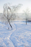 Abedul del hielo Fotos de archivo