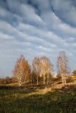 Abedul del otoño Foto de archivo libre de regalías