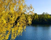 Abedul del otoño contra el lago Foto de archivo libre de regalías
