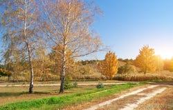 Abedul del otoño en parque Fotos de archivo