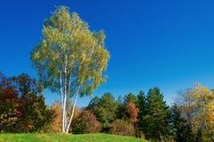 Abedul del otoño en un paisaje en las montañas italianas Foto de archivo libre de regalías