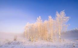 Abedul del paisaje en la salida del sol en helada Foto de archivo libre de regalías