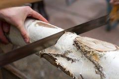 Abedul del sawing (2) Foto de archivo