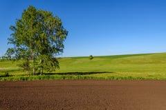 Abedul del surco del prado del campo rural Fotos de archivo
