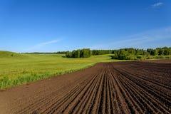Abedul del surco del prado del campo rural Foto de archivo libre de regalías
