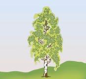 Abedul del vector Imagen de archivo libre de regalías