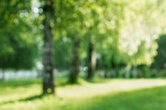 Abedul del verano desenfocado Fotografía de archivo libre de regalías