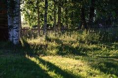 Abedul e hierba en campo de la puesta del sol Imagen de archivo