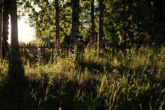 Abedul e hierba en campo de la puesta del sol Foto de archivo