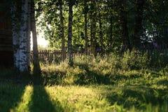 Abedul e hierba en campo de la puesta del sol Imágenes de archivo libres de regalías