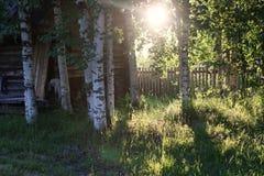 Abedul e hierba en campo de la puesta del sol Foto de archivo libre de regalías